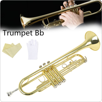 Golden Trumpet Bb Flat Gold Painted Brass with Cleaning Cloth Gloves